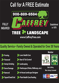 Cafferty Tree and Landscape